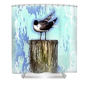 Seagull - Laughing Gull Pop Art  Shower Curtain