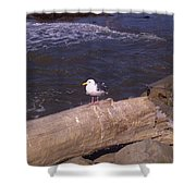 King Of The Seagulls Shower Curtain