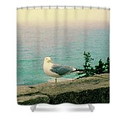 Seagull On Stone Wall Shower Curtain