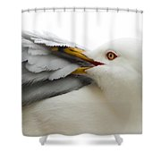 Seagull Pruning His Feathers Shower Curtain