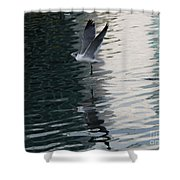 Seagull Reflection Over Blue Bay Shower Curtain