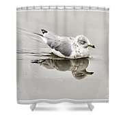 Seagull Reflections Shower Curtain