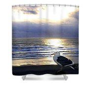 Seagull Sentinel Shower Curtain