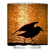 Seagull Silhouette Shower Curtain