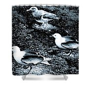 Seagull Trio Shower Curtain