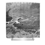 Seagull With Bread Shower Curtain