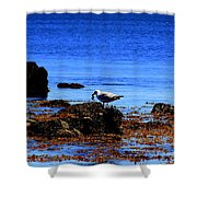 Seagull With Crab Shower Curtain
