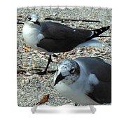 Seagulls #3 Shower Curtain
