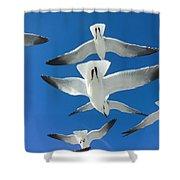 Seagulls #4 Shower Curtain