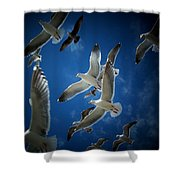 Seagulls Above Shower Curtain