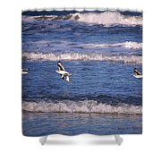 Seagulls Above The Seashore Shower Curtain