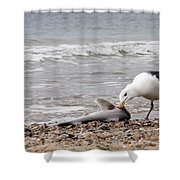 Seagulls Catch Of The Day Shower Curtain