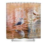 Seagulls - Impressions Shower Curtain