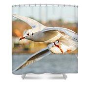 Seagulls In The Air Shower Curtain