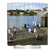 seagulls near a pond in the center of Reykjavik Shower Curtain