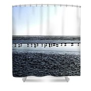 Seagulls On A Sandbar Shower Curtain