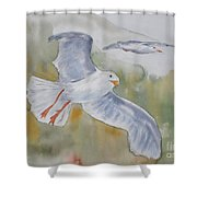 Seagulls Over Glacier Bay Shower Curtain