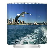 Seagulls Over Sydney Harbor Shower Curtain