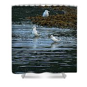 Seagulls-signed-#9360 Shower Curtain