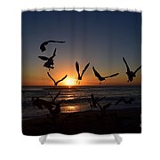 Seagulls Silhouettes Shower Curtain