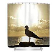 Seagull's Sunrise Silhouette Shower Curtain