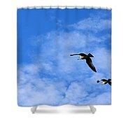 Seagulls2 Shower Curtain