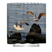 Seaguls 3 Shower Curtain