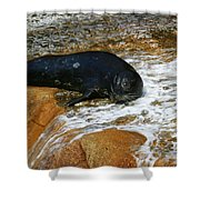 Seal Shower Curtain