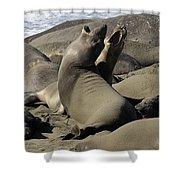 Seal Duet Shower Curtain