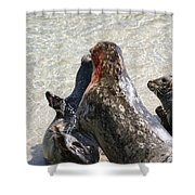 Seal Fight Shower Curtain