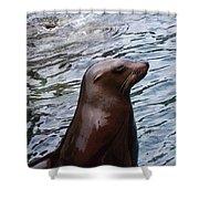 Seal Shower Curtain