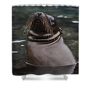 Seal In The Water Shower Curtain