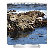 Seal Island Shower Curtain