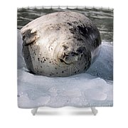 Seal On Iceberg Shower Curtain