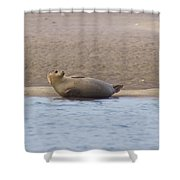 Seal Relaxing On Cupsogue Beach Shower Curtain