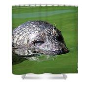 Seal Swimming Portrait Wildlife Scene Shower Curtain