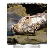 Sealed With A Smile Shower Curtain