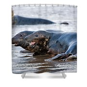 Seals Shower Curtain