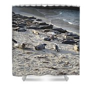 Seals, Seals, And More Seals Shower Curtain