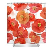 Seamless   Pattern Of Watercolor Poppy Flowers Shower Curtain
