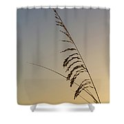 Seaoats At Dawn Shower Curtain