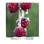 Seasonal Colors Shower Curtain