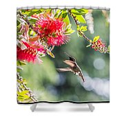 Searching For Nectar Shower Curtain