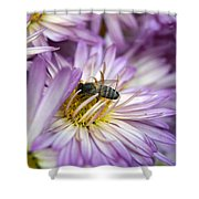 Searching Honey Shower Curtain