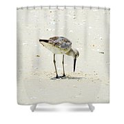 Searching Plover Shower Curtain