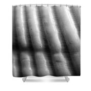 Seashell Abstract Black And White Sanibel Island Florida Gulf Coast Shower Curtain
