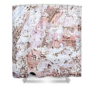 Seashell Abstract Shower Curtain