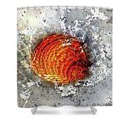 Seashell Art - Square Format Shower Curtain