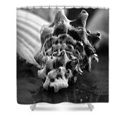 Seashell Bw  Shower Curtain