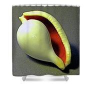Seashell Egg Cowry Shower Curtain